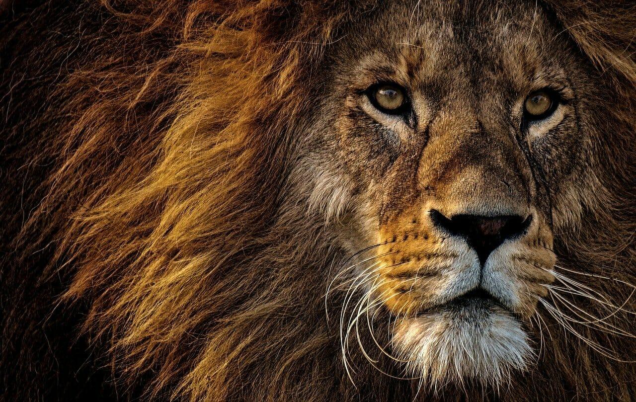 Lions, SMEs, multinationals,