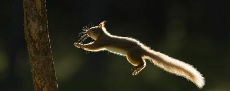 red squirrel rewilding initiative
