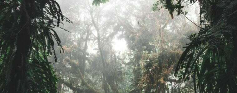 The Rainforest Alliance have Released their 2020 Report